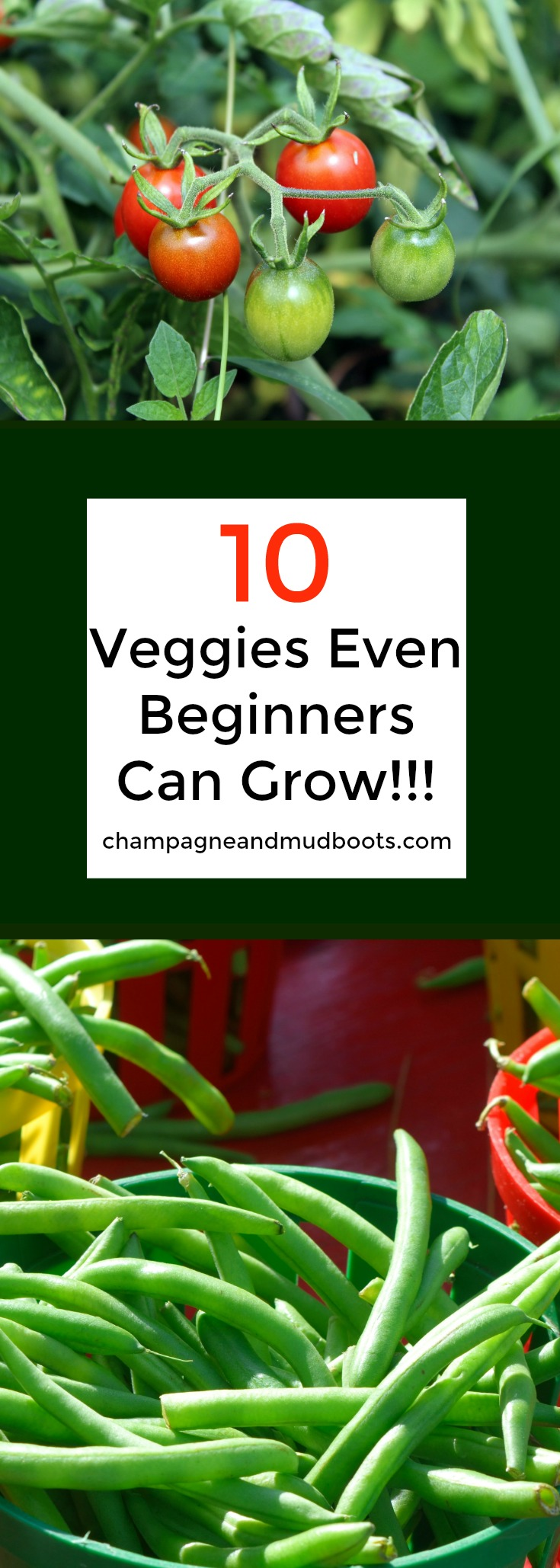 Easy to grow vegetables for the beginning gardener that will help even the inexperienced have a successful and productive garden.