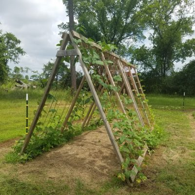 Easy DIY Trellis Ideas