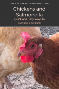 This article provides techniques and methods for how to raise chickens and avoid salmonella at the same time especially for beginner chicken keepers.