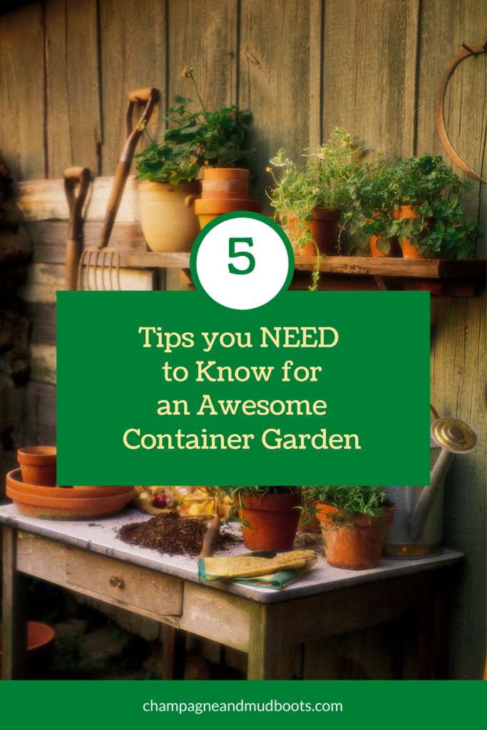 Thinking about starting a container garden or is your underperforming? These are the five best tips you need to create an awesome container garden.