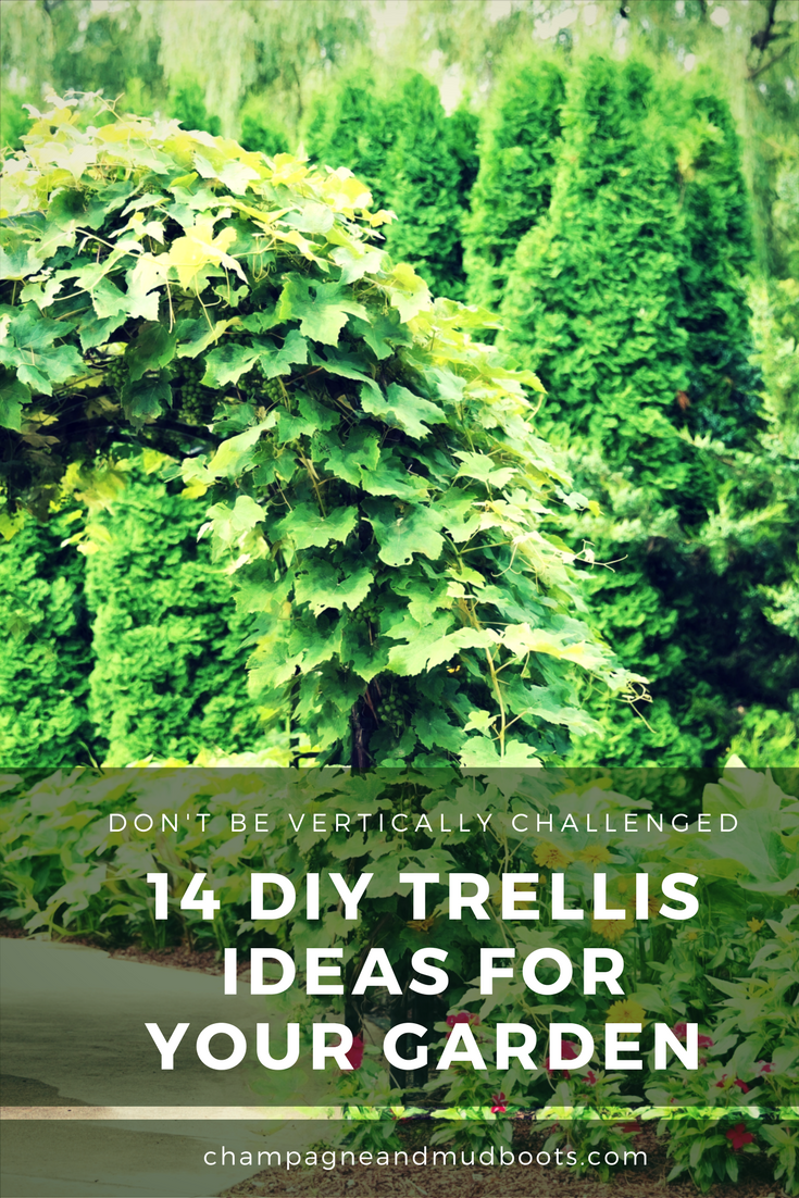 Find easy DIY trellis ideas for your vegetable garden that will allow you to grow more food in a smaller space and enhance the beauty of your garden.