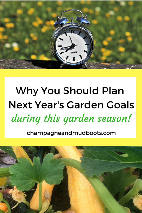 How to create a vegetable garden plan based on the mistakes of your current garden to improve layout, design, seed starting, and crop production.
