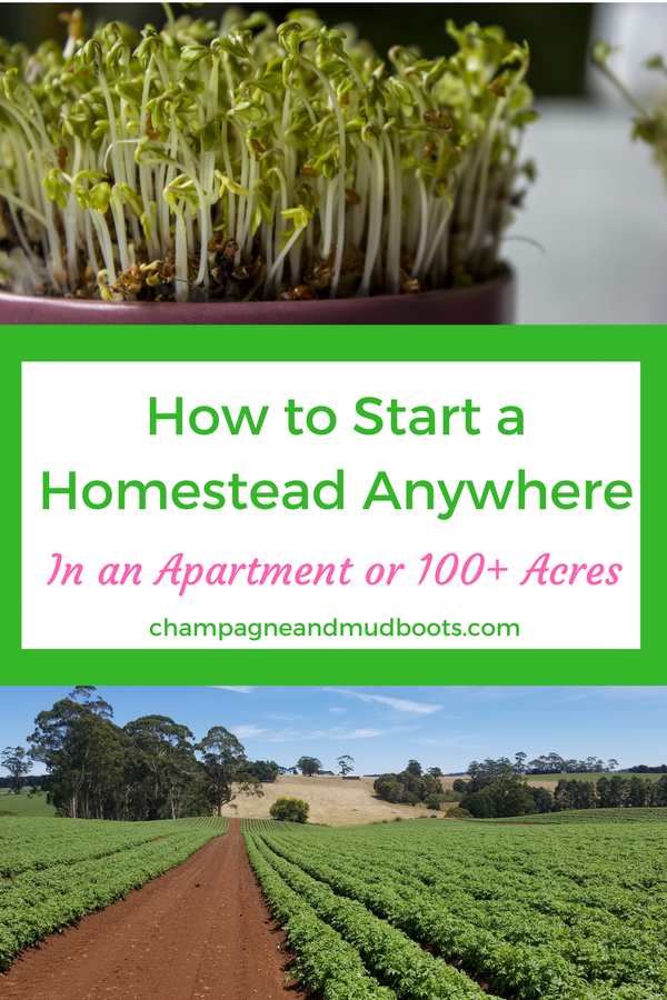 Step by step guide for how to start homesteading regardless of where you currently live including tips and ideas on how to homestead in an apartment, homestead in the suburbs or the ultimate homesteading on acreage.