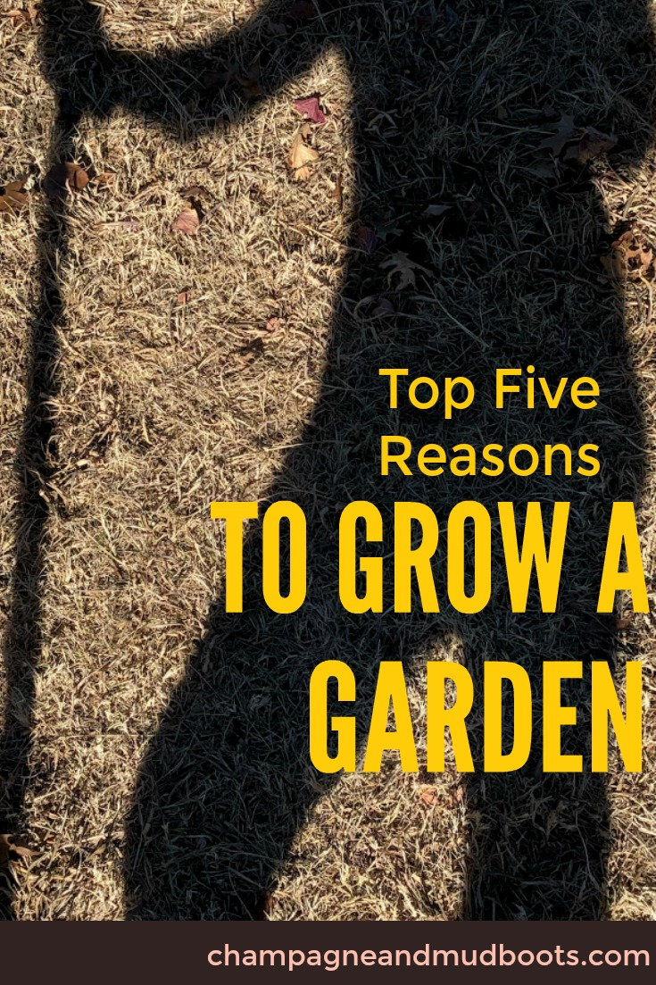 This article provides encouragement for the beginner gardener and reasons they should start a garden even if they feel clueless.