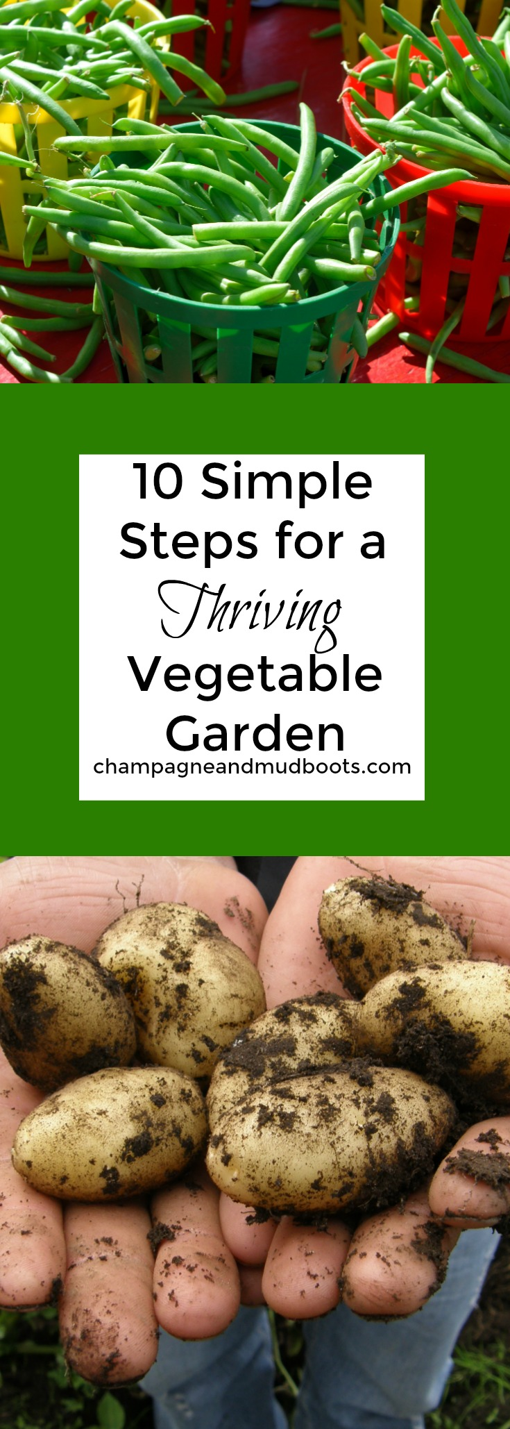 This article gives you 10 simple steps for creating and planning a productive vegetable garden with increased yields and less stress for you.