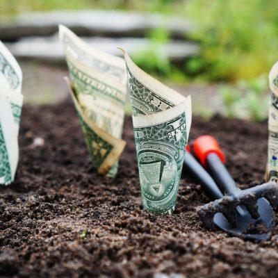 Top 6 Mistakes I Made as a Beginner Gardener