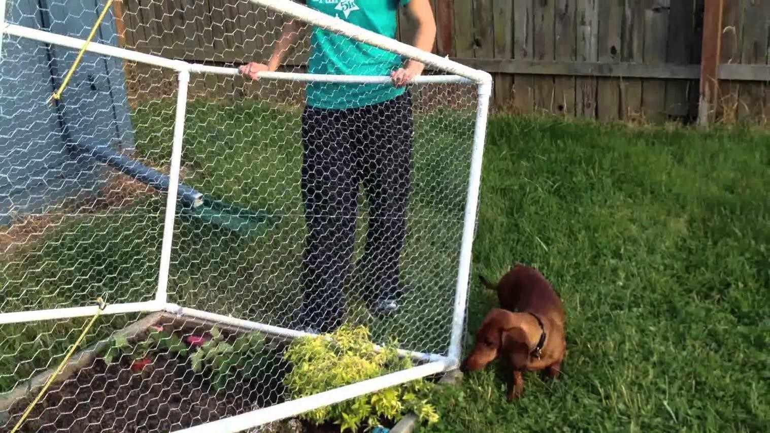 Pvc Diy Garden Fence Garden Fence Ideas Diy Deer Proof Some Nice