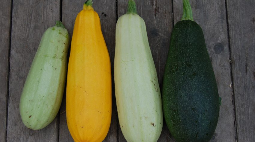 10 Easy to Grow Vegetables for Your Garden